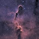 Elephant Trunk Nebula,                                Amin Ashrafi