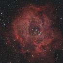 NGC 2237 - Nebulosa Rosetta,                                Salvatore Cozza