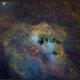 IC410 The Tadpoles Nebula,                                Randal Healey