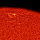 Sun AR12773 H-alpha September 23, 2020,                                LeoD