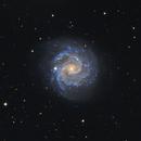Galaxy NGC 3184. From the realm of perfect galaxies,                                Simas Šatkauskas