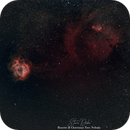 Rosette & Christmas Tree Widefield (135mm),                                stevemr2t