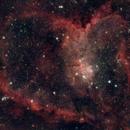 Heart Nebula,                                spiantino