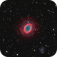 M57 with double-layered petals,                                Ray Liao