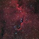 Elephant trunk nebula, IC1396,                                Mike Carroll