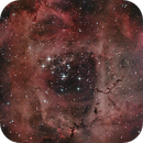 Rosette Nebula,                                Samuel Müller