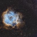 Caldwell 49 Rosette Nebula Narrowband (HOS),                                William Jordan