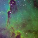 The Elephant's Trunk Nebula,                                Stephen Piatkowski