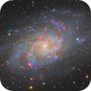 M33 with red and green flowers,                                Ke Meow
