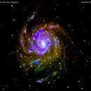 m101 galassia nell'orsa maggiore                                                  distanza 26 milioni   A.L.,                                Carlo Colombo