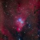 NGC 2264 Deep Sky West,                                Craig Prost