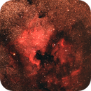 NGC7000 North America and Pelican Nebulae,                                Aldo Bassi