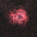 Rosette Nebula,                                Phil Creed