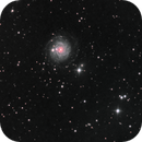 NGC 3344, LRGB, 13 Apr 2020,                                David Dearden