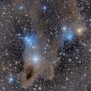 LDN 1235 - The Dark Shark Nebula in Cepheus,                                Nippo81