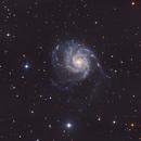 M101 Pinwheel Galaxy,                                Chris Alberts