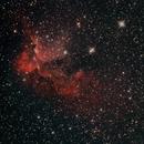 Wizard Nebula NGC 7380,                                Carsten Eckhardt