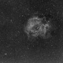 C49 Rosette Nebula-NGC 2237-H-alpha-Canon 250 mm-ASI 1600,                                Adel Kildeev