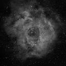 NGC 2238: Rosette Nebula in Ha (2012),                                Kurt Johnston