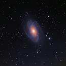 M 81 / NGC 3031,                                Sammler