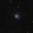 M101,                                Rino