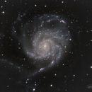 M101, The Pinwheel Galaxy,                                Richard Francis
