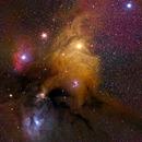 Rho Ophiuchi Cloud Complex,                                Reggie