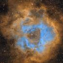 Rosette Nebula,                                Steve MacDonald