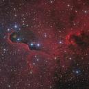 IC 1396A - Elephant Trunk Nebula,                                Markus Blauensteiner