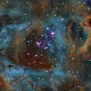 NGC2237,                                Peter Kestel