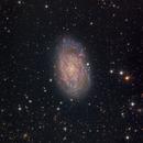 NGC 7793,                                SCObservatory