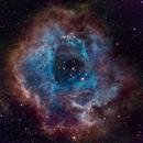 NGC 2244- ROSETTA NEBULA,                                Carlos Uriarte