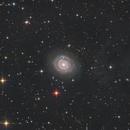 NGC 3147 plus IFN,                                Tim Gillespie
