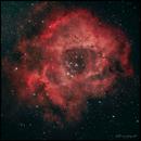 C49 - Rosette Nebula,                                Thierry Hergault