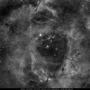 Rosette Nebula in Ha,                                Michael Feigenbaum