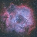 NGC2237 The Rosette Nebula,                                Marcelo Cassese