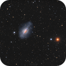 NGC3521 - The Bubble Galaxy,                                Markus Bauer