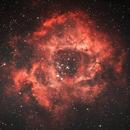 NGC 2237 - 2244 Bicolor Version,                                K. Schneider