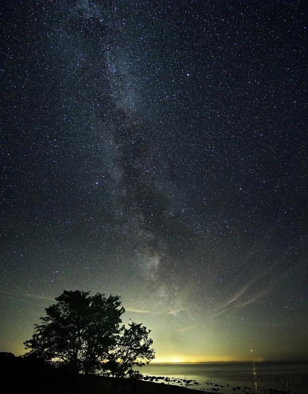 Stars over sea,                                Vital