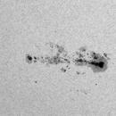 Sunspot in white light,                                Janos Barabas