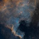 North American Nebula (NGC7000),                                Dick Newell