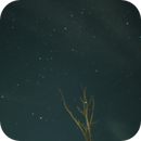 Stars Around the Ghost Tree - Time Lapse,                                Van H. McComas