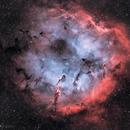 IC1396,                                GregGurdak