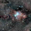 The Cone Nebula, Fox Fur Nebula and Christmas Tree Cluster...NGC2264,                                Ray Heinle
