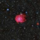 SH2-247, NGC2175 (Monkey Head Nebula), IC2162,                                Martin Mutti