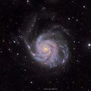 M101 in LRGB,                                Girish