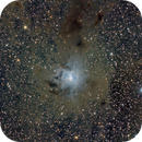 NGC 7023 Iris Nebula #5,                                Molly Wakeling