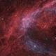 Cygnus Shell Variations,                                Nico Carver