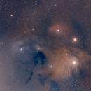 Rho Ophiuci Region,                                David Wright