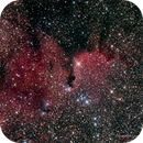 The Elephant Trunk Nebula—RCW 75,                                Russ Carpenter